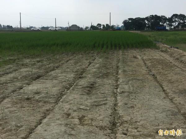 稻田鄰六腳大排處的表土遭洪水沖走,無法復耕。(記者蔡宗勳攝)