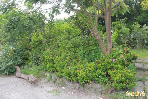花圃種有十數種蝴蝶食草,保護水土的試體遭竊,植栽易流失,復育蝴蝶生態也出現危機。(記者陳冠備攝)