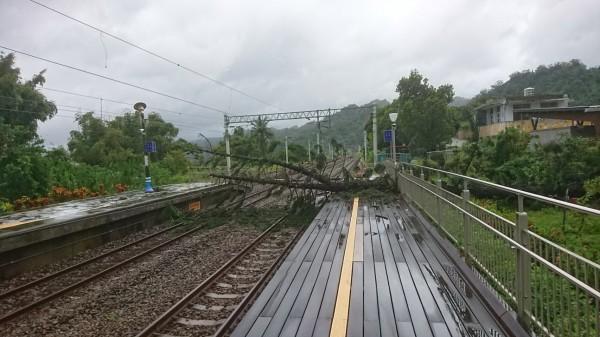 山里車站大樹因強風倒下壓斷電車線。(台鐵提供)
