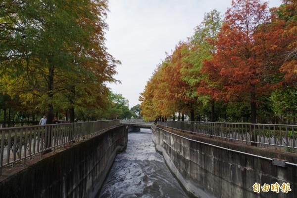 落羽松冬季變色別有風情。(資料照,記者林國賢攝)