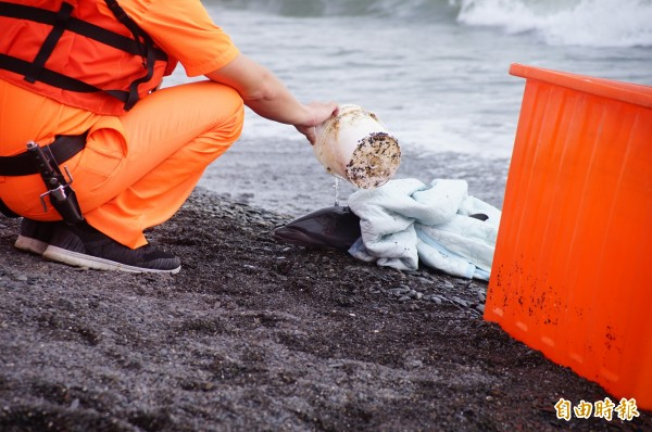 海巡署岸巡第六隊隊員持續澆灌海水保持海豚身體濕潤。(記者陳彥廷攝)
