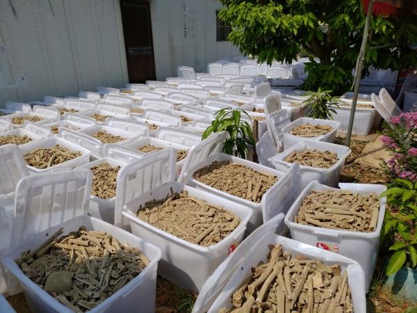 熱心鄉親今天將無主骨骸一箱箱搬出戶外曬乾,場面壯觀。(記者曾迺強攝)