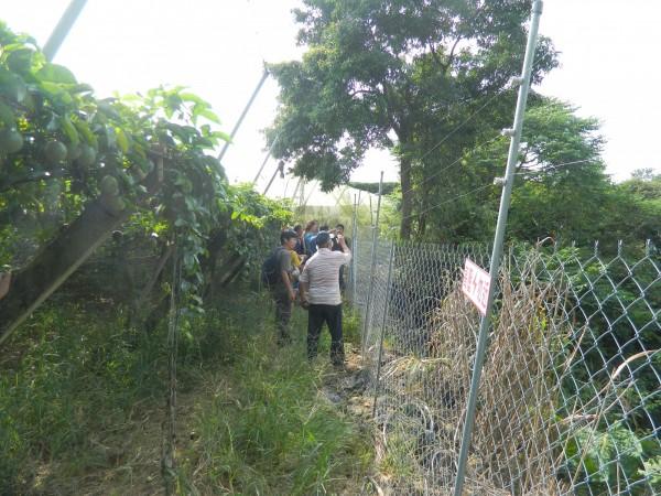 目前農委會與學術團體也協助農民在果園四周裝設電網,有效防範猴群侵擾。(圖:林務局南投林管處提供)