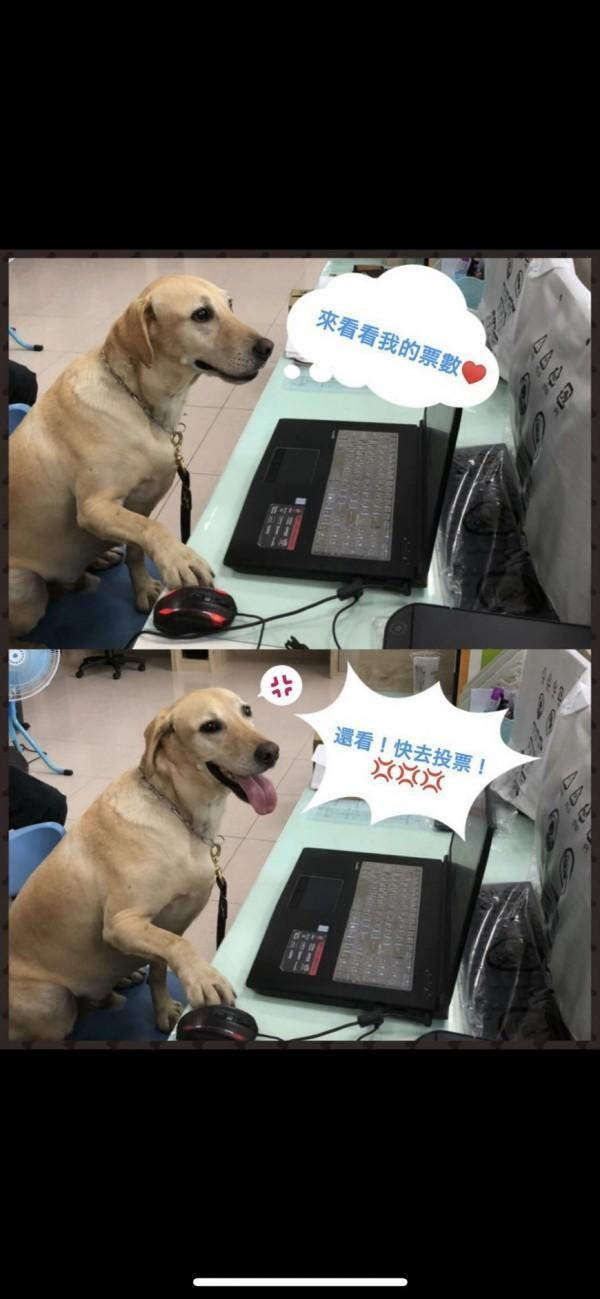 11號「健康」在台東縣消防局人員的創意下,坐在電腦前的萌照好吸睛。(台東縣消防局提供)