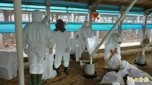 禽畜業及動物防疫相關人員,也是公費流感疫苗的接種對象。(資料照)