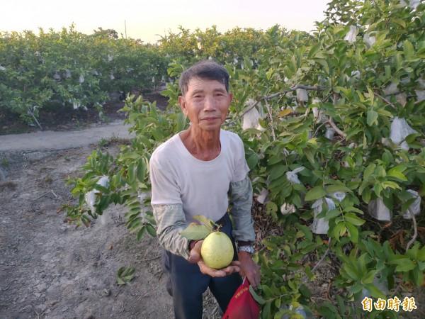 蕭振清是社頭種植珍珠芭樂始祖,曾獲神農獎、2次全國冠軍與2次總統召見肯定,有「芭樂王」美名。(資料照)