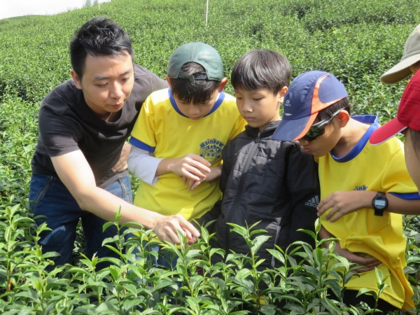 南大附小彩虹斑馬志工隊戶外教育課程參觀茶園,體驗採茶。(彩虹斑馬志工隊提供)