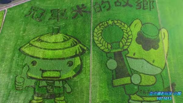 2018台南好米季彩繪稻田,今年以台、日吉祥物為主題,「群馬寶寶」及「仕安寶寶」已成形,20日公開亮相。(圖由南市農業局提供)(記者王涵平攝)