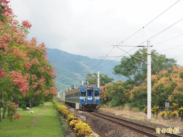 瑞和火車站鐵道兩旁的台灣欒樹花開,近一個月吸引不少民眾來次拍照。(記者王秀亭攝)