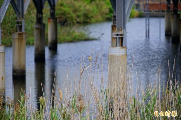林邊光采濕地架有太陽能板種電,仍有許多鳥類棲息。(記者陳彥廷攝)