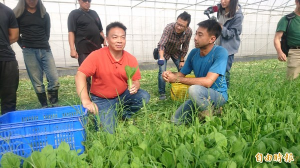 高思博(前左)下午參訪官田區時生永續農場採收有機蔬菜。(記者楊金城攝)