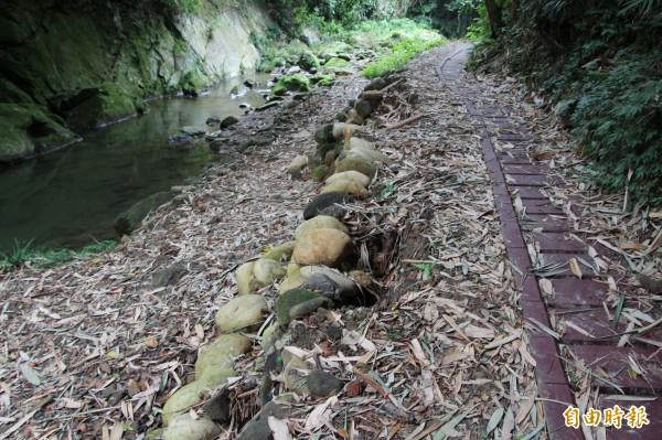 新竹農田水利會在四寮溪施作圳路(右)後,圖左的步道、一旁的邊坡地質因此鬆動不再安定,就連圖中卵石也遇水就鬆動。(記者黃美珠攝)