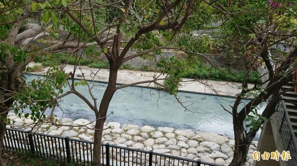 竹溪是台南市區內少見未完全人工填蓋的都市河川。(記者洪瑞琴攝)