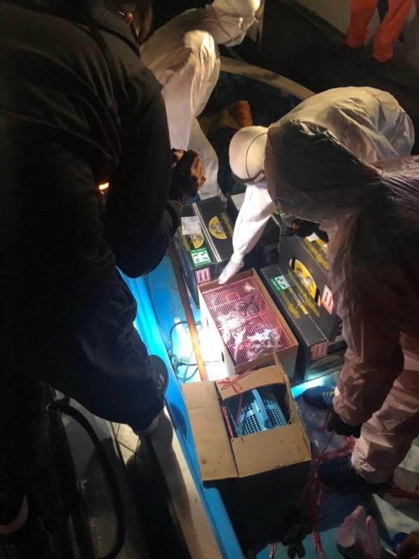 金門岸巡隊在登檢中國快艇上查獲五箱可疑的走私活體,立刻由人員穿上防護衣進行檢視。(圖由金門岸巡隊提供)