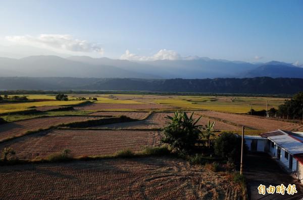 畫家優席夫的部落皇后藝術咖啡館擁有縱谷最美視野,最近縱谷的稻田剛收割,田野見不到一根電桿,夕陽光影迷人,遠處的山是舞鶴台地跟中央山脈。(記者花孟璟攝)