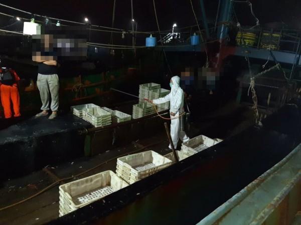 中國非洲豬瘟橫行,3艘中國籍漁船越界捕撈,船上雖未查獲豬肉等製品,農委會動植物防疫檢疫局台中分局台中港檢疫站依舊派員消毒,以防萬一。(記者歐素美翻攝)