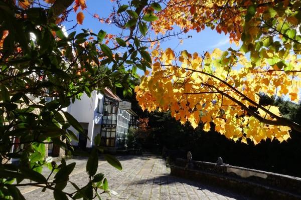 玉山塔塔加園區楓紅乍現,位在遊客中心的楓樹已轉紅。(玉管處提供)