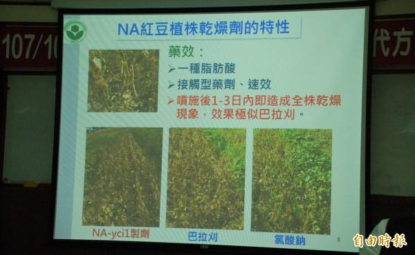 農委會比較NA-ycil、巴拉刈及氯酸鈉三種落葉劑的乾燥效果後,認為NA-ycil最佳,籲請農友安心使用。(記者李立法攝)