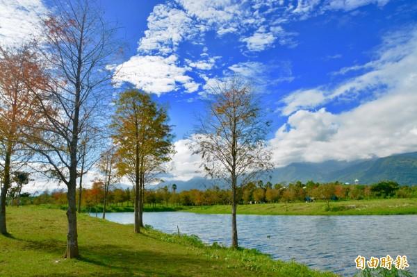 花蓮壽豐鄉再添一處小河落羽松景觀區,整片落羽松林紅綠葉自然展放,在青山、白雲及藍天襯托下,彷彿幽謐仙境,美景如置身北國,令人屏息。 (記者王峻祺攝)