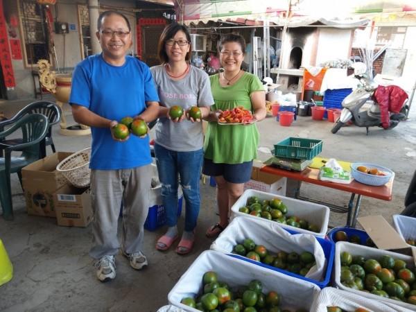 屏東縣九如鄉農民楊傳生(左)種植黑柿番茄受歡迎。(圖由農糧署南區分署提供)