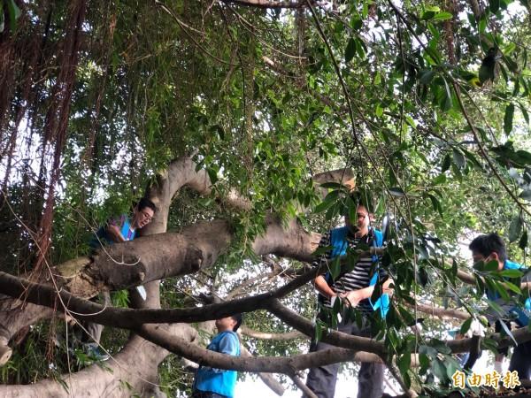 矽品志工幫忙獨居老人鋸樹。(記者張軒哲攝)
