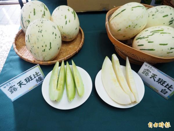 草屯農民李文宏種的洋香瓜「斑比」糖度最高到17度。(記者陳鳳麗攝)