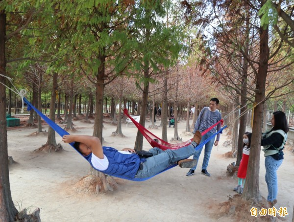 中科落羽松園主在松林裡設置吊床,民眾在吊床上休憩,好不愜意。(記者歐素美攝)
