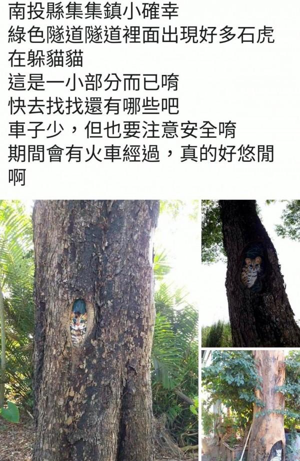 南投縣集集綠色隧道石虎彩繪裝置藝術,乍看石虎好像在樹洞玩躲貓貓遊戲,吸引往來民眾目光。(記者謝介裕翻攝)