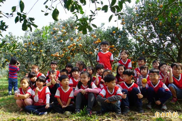 斗六幼兒園的小朋友到茂谷柑園戶外教學,了解在地農特產品。(記者詹士弘攝)
