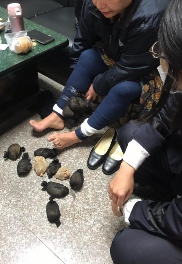 金門海關截獲一名婦女,將二十四隻沙鼠包在絲襪裡,再綁在右、右小腿企圖闖關。(圖由第九岸巡隊提供)