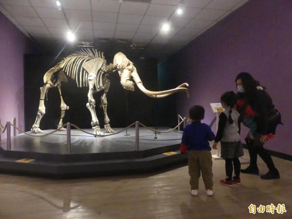 金門古生物特展中的長毛象,從台灣移師離島金門展出,成為入場參觀的焦點。(記者吳正庭攝)