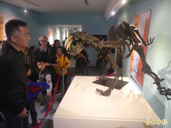 金門縣長楊鎮浯(左一)在文化局參觀展出的「史前巨獸」化石及模型駐足。(記者吳正庭攝)