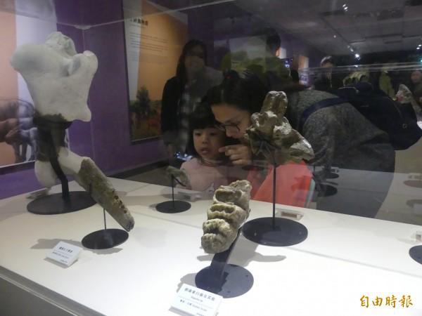 金門縣文化局與國立台灣博物館合辦的「史前巨獸-古生物特展」有超過九成是化石元件,是大人教育小朋友最好的生物教材。(記者吳正庭攝)