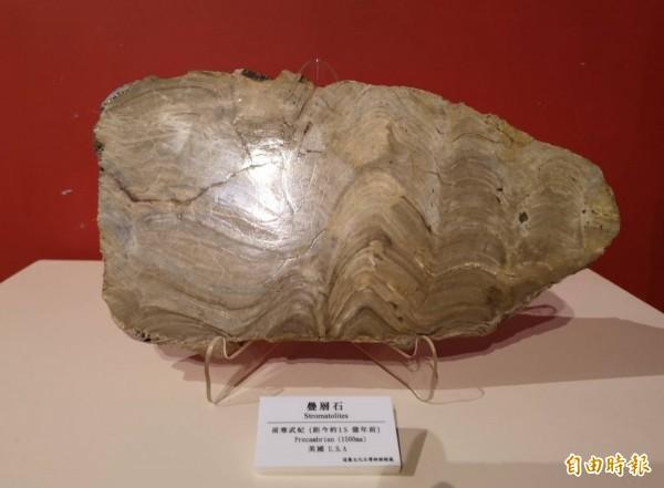 金門「史前巨獸-古生物特展」展出十五億年前的生物化石「疊層石」。(記者吳正庭攝)