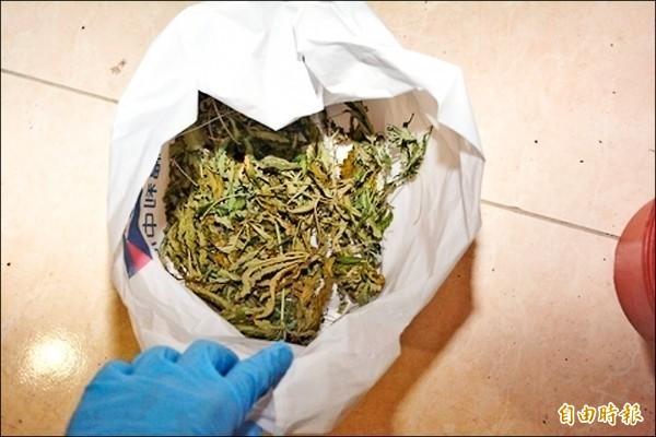 警方查扣乾燥大麻葉約56公克。(資料照)