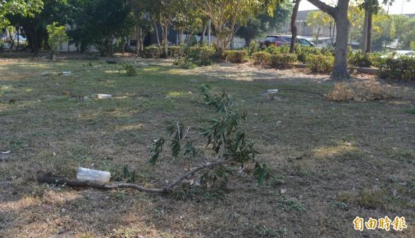 太平區豐年公園15棵樹,近日接連遭人惡意鋸斷倒一地,豐年里長劉盈欣和澆水志工覺得很痛心。(記者陳建志攝)