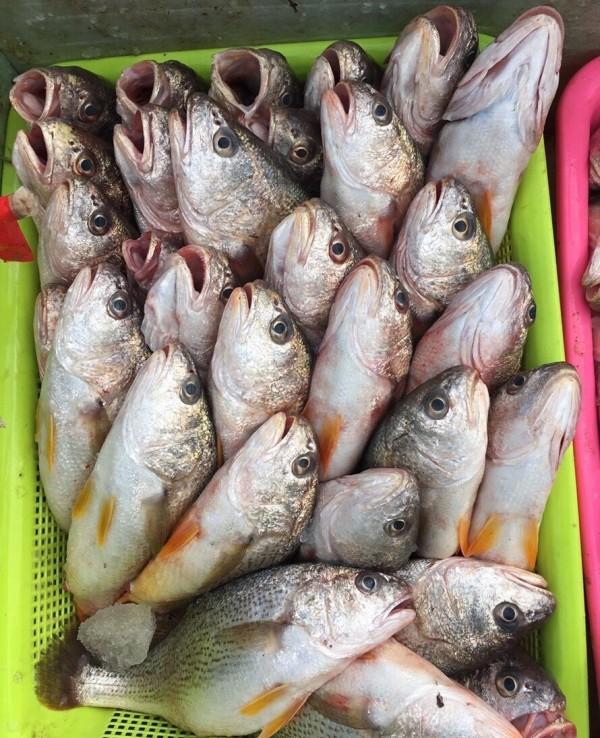 台南地檢署查獲振瑞發88號漁船涉走私未經檢疫的中國魚貨5000餘公斤進入台南安平港。(記者王俊忠翻攝)