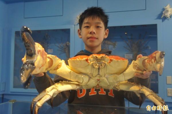 澳洲皇帝蟹張開螯腳,比小朋友臉還大。(記者劉禹慶攝)