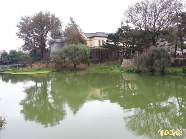 大年初一來走春!新竹市新竹公園的河津櫻花。(記者洪美秀攝)