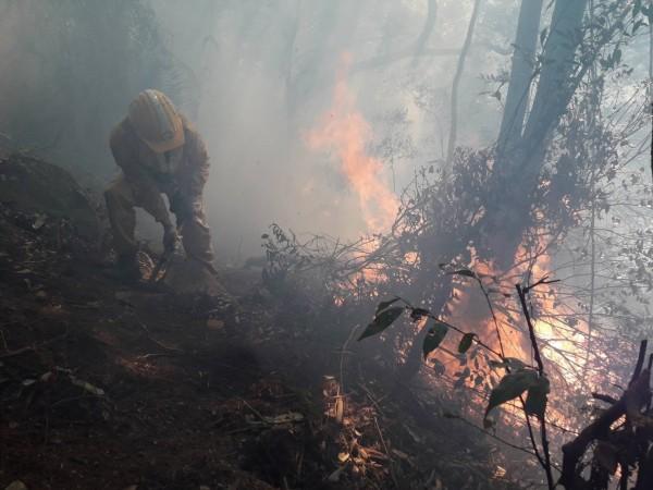 南投信義潭南山區發生森林大火,林務局人員在烈焰下冒險開闢防火線打火。(記者劉濱銓翻攝)