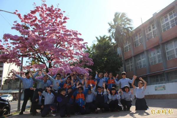 開學日,南郭國小洋紅風鈴木盛開,美迎學童開學。(記者張聰秋攝)