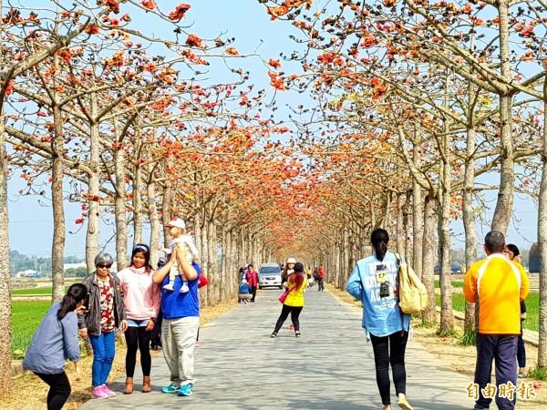 名列全球最美花海街道之一的林初埤木棉隧道,白河公所表示,花季活動將提前至本週末開始舉行。(記者王涵平攝)