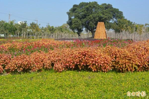 市府在太平九二一地震公園旁打造小花海,目前各種花朵盛開相當漂亮。(記者陳建志攝)