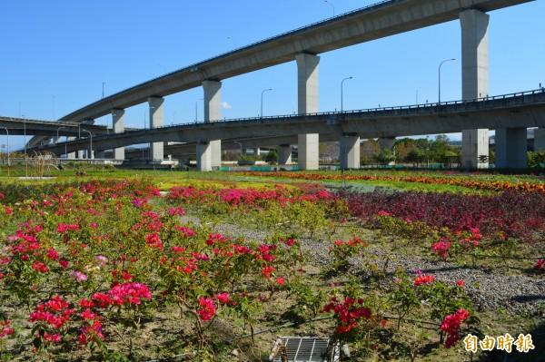 市府在霧峰福新路旁的丁台公園打造小花海,成為附近民眾的後花園。(記者陳建志攝)