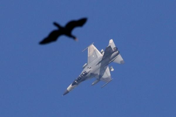 張文良在東石鰲鼓濕地拍下戰機與野鳥「同框」。(張文良提供)