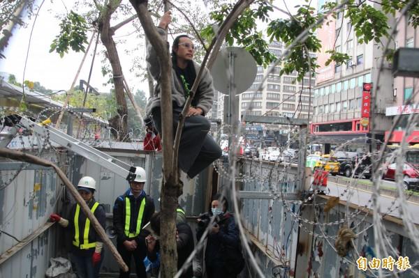 經過1年,北市府再度委託遠雄代辦移樹,為了避免再延宕1年,大巨蛋籌備處副執行長陳世浩說,只要移樹計畫核准就會準備,甚至不排除出動警力。(資料照,記者鍾泓良攝)