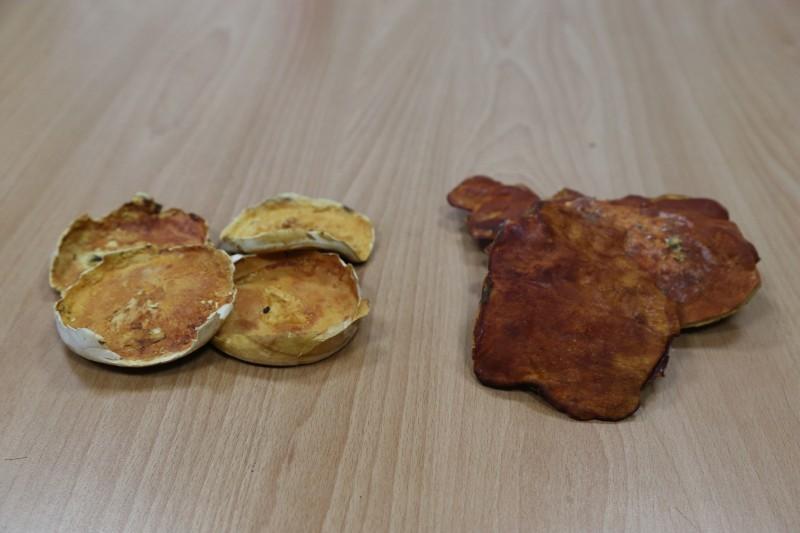 興大研究可在實驗室培養出牛樟芝實體(左),不必依賴牛樟樹段長成牛樟芝(右)。(圖:興大提供)