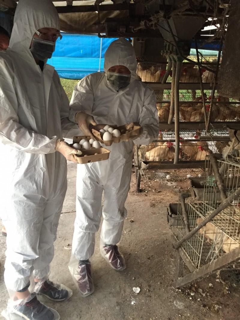 南市動保處把關畜禽產品安全,今年度迄今監測肉、蛋與血清,未發現違規情形,籲請消費者安心食用。(圖由南市動保處提供)