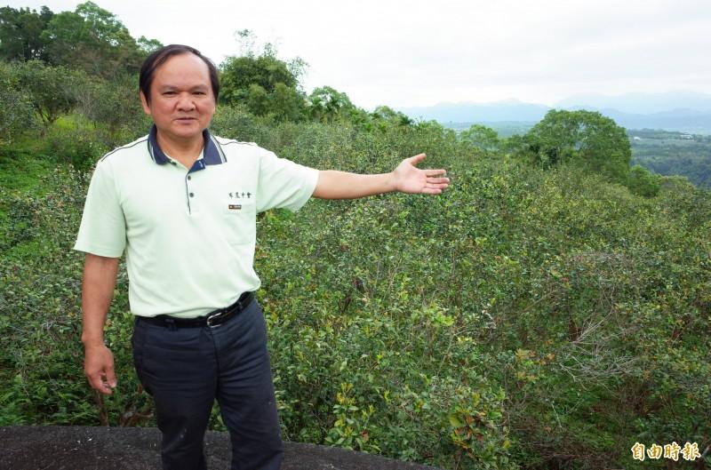 溫光亮牧師說,崙山部落的苦茶是台灣原生種的小果苦茶,因產量少價格高,500ml苦茶油售價1600元,苦茶園位於中央山脈向陽的山坡地,沒有任何農藥。(記者花孟璟攝)