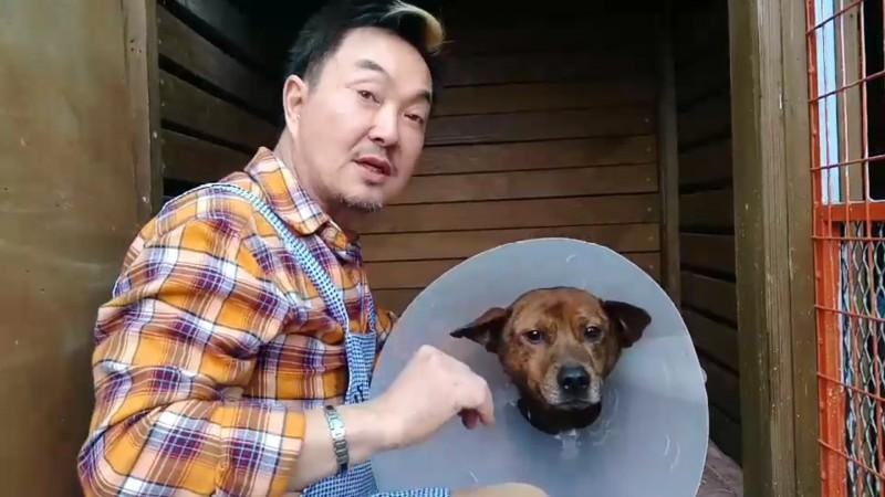 被拖行受傷的小狗,由藝人楊懷民帶回照顧。(記者江志雄翻攝)